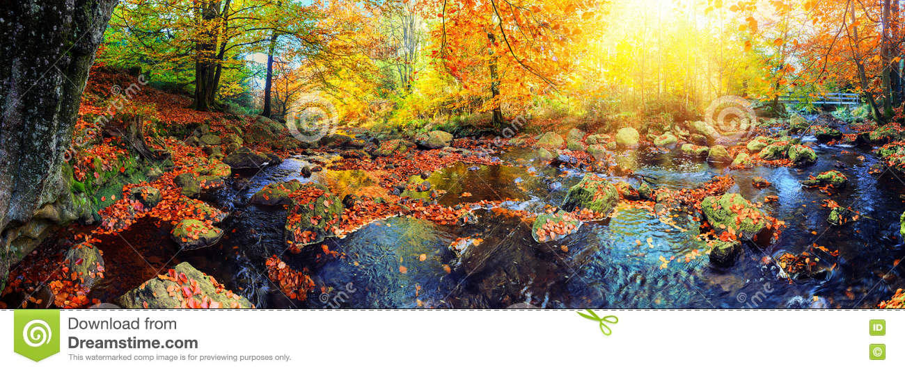 Panoramic autumn landscape with forest stream. Fall nature background