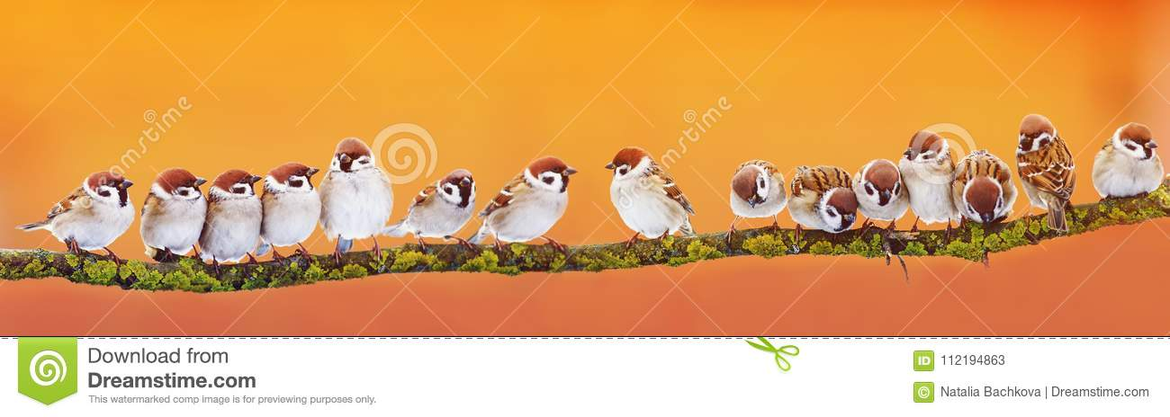 Panoramic banner of a lot of funny little birds sparrows on a br