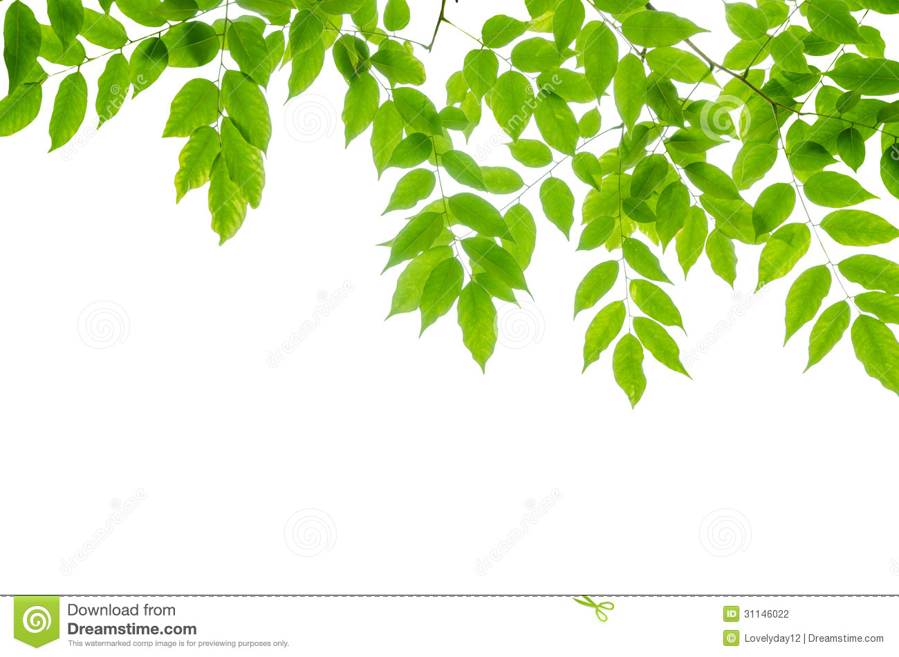 Panoramic Green Leaves On White Background Stock Photo