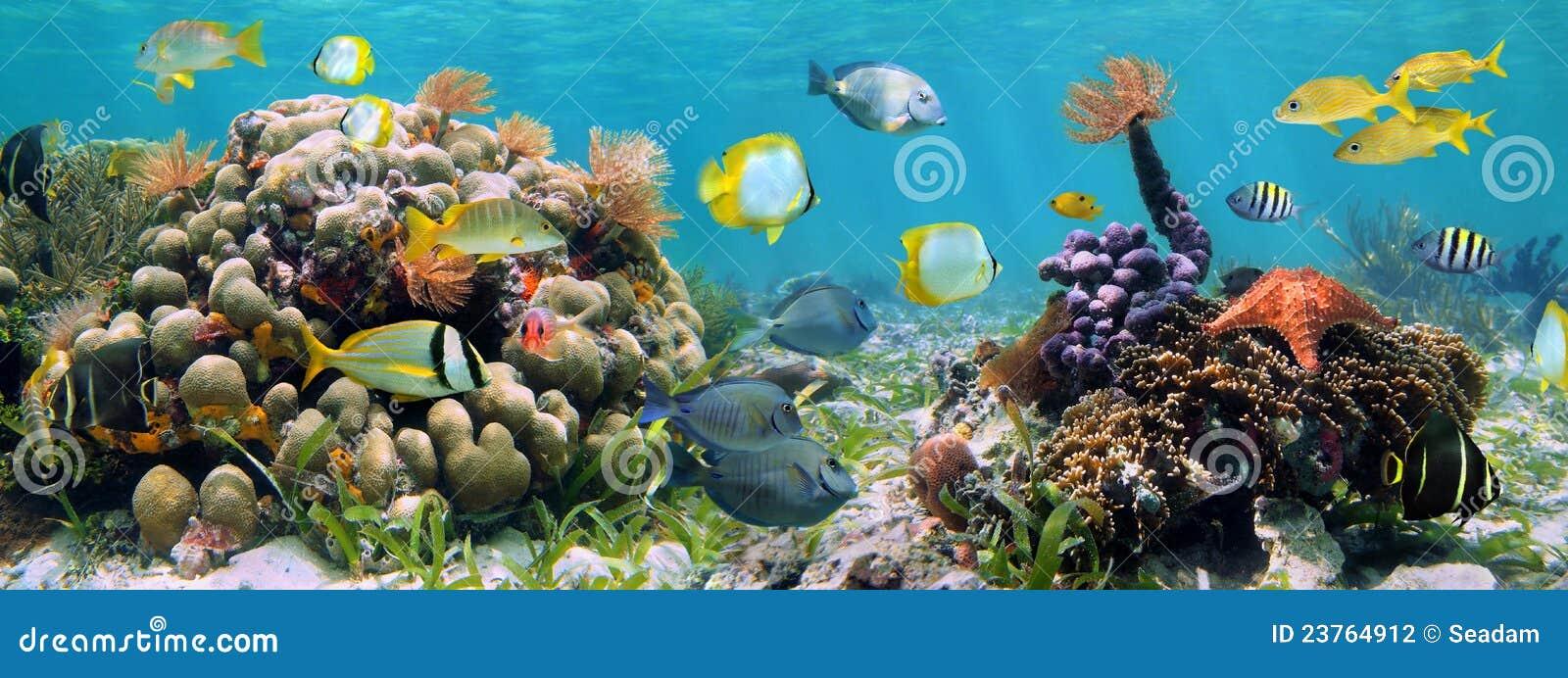 Panoramic reef