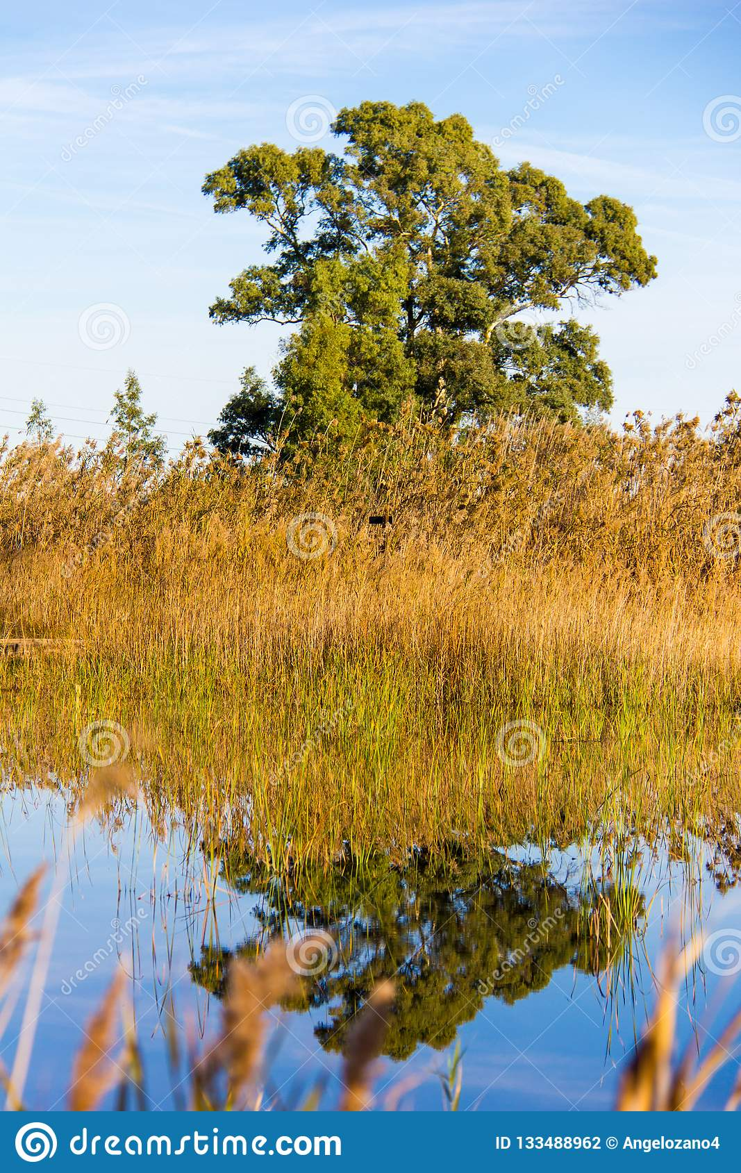 Panoramic view of a bird observatory, in the wetlands natural park La Marjal in Pego and Oliva