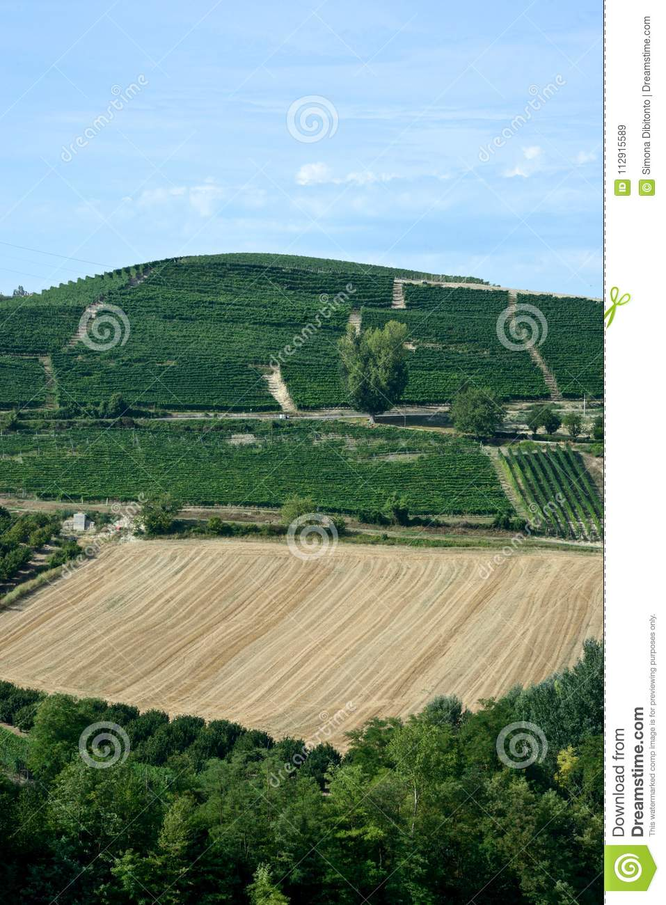 panoramic view of countryside with vineyard, cultivated fields