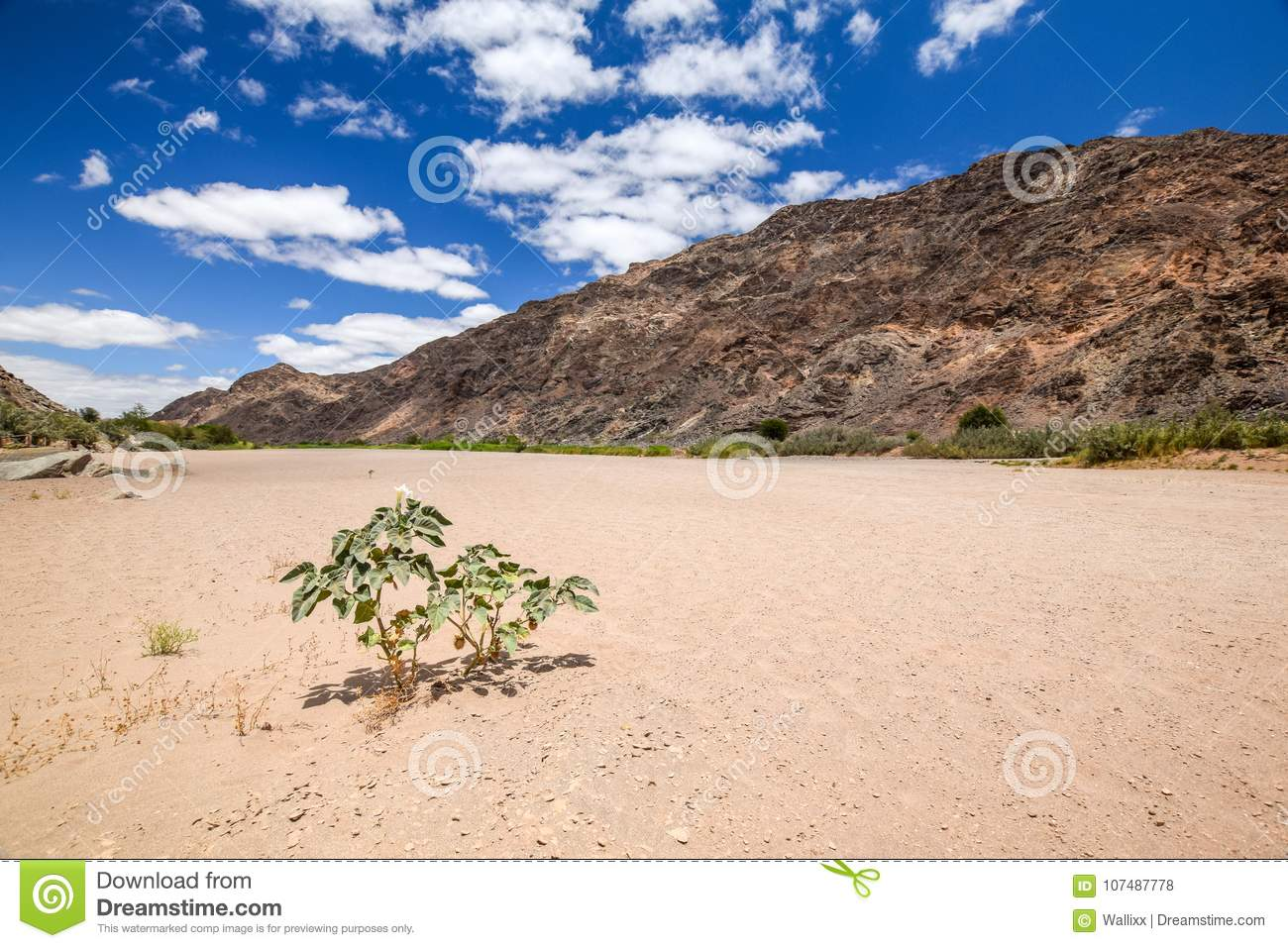 Panoramic view of the dry riverbed and a plant near Ai-Ais Hot Springs at Fish River Canyon, Namibia