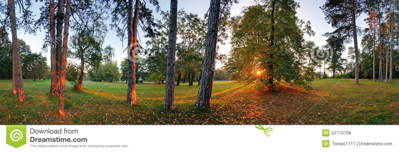 Panoramic View Of Forest, 360 Degree Stock Photo - Image of