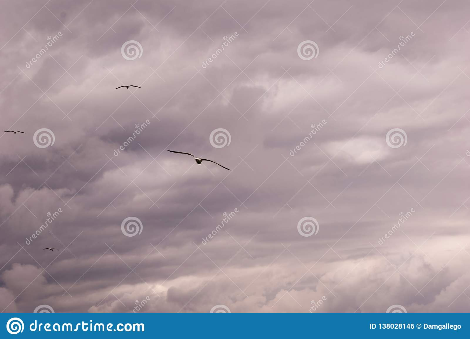 Panoramic view of a group of seagulls flying against a stormy sky-scape