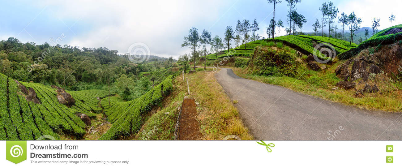 Panoramic view in Munnar in western Ghats, Kerala