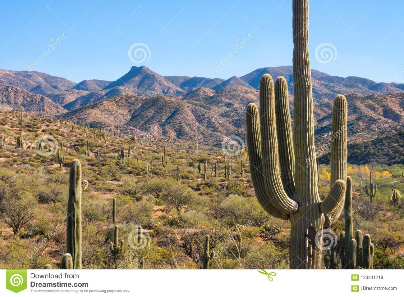 Scenic and historic mountain view at Apache trail Arizona, cactus landscape red rock formations