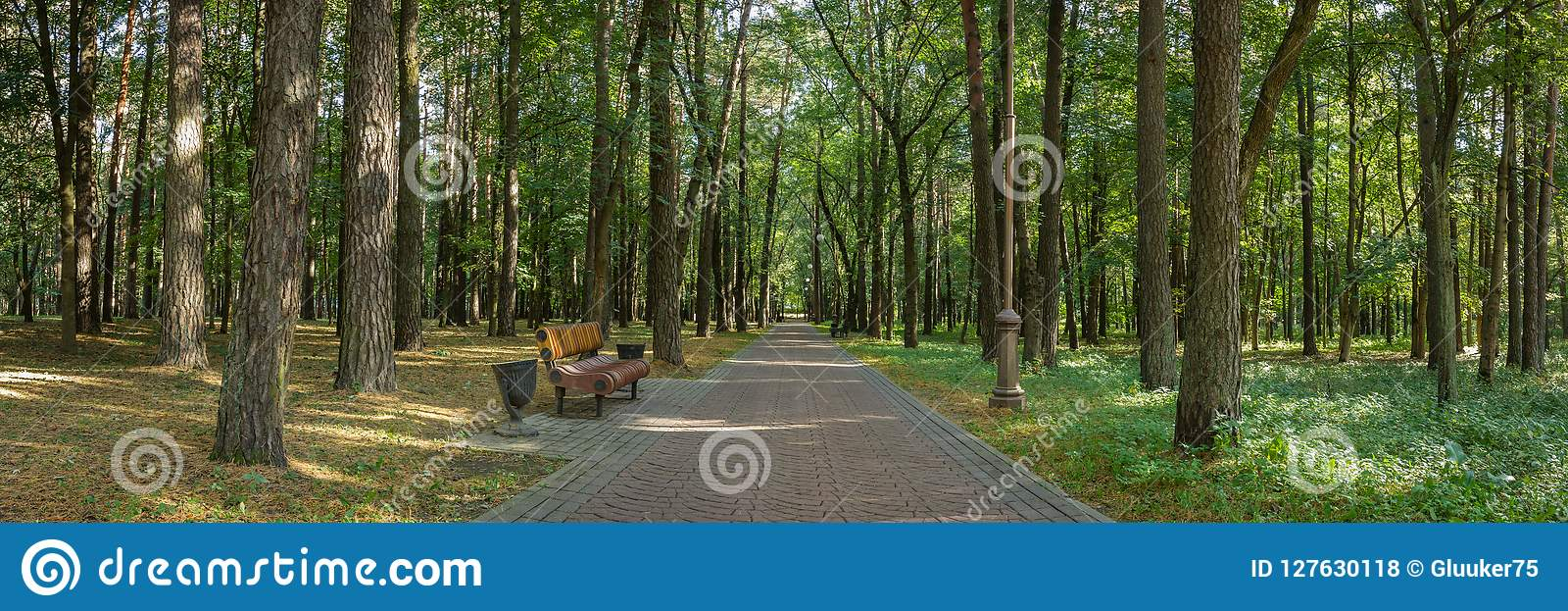 panoramic view of the public city park with a bench on the edge of a neat shady alley lined with tall trees