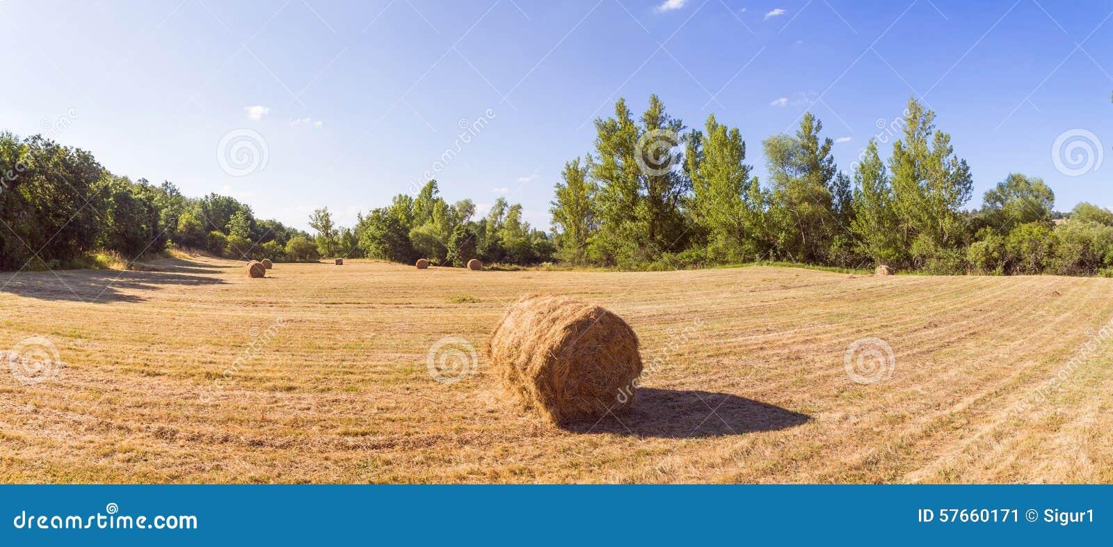 Panoramiczna łąka z trawą Koszącą