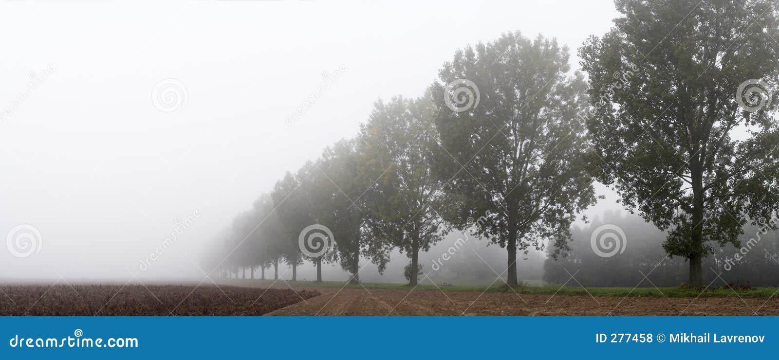 Panoramiczni rzędów drzew
