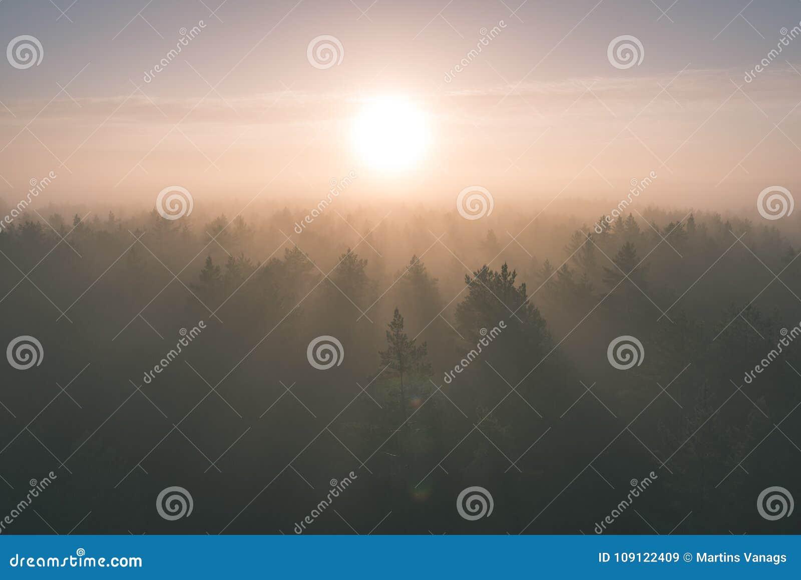 Panoramiczny widok mglisty las przy majestatycznym wschodem słońca nad drzewami -