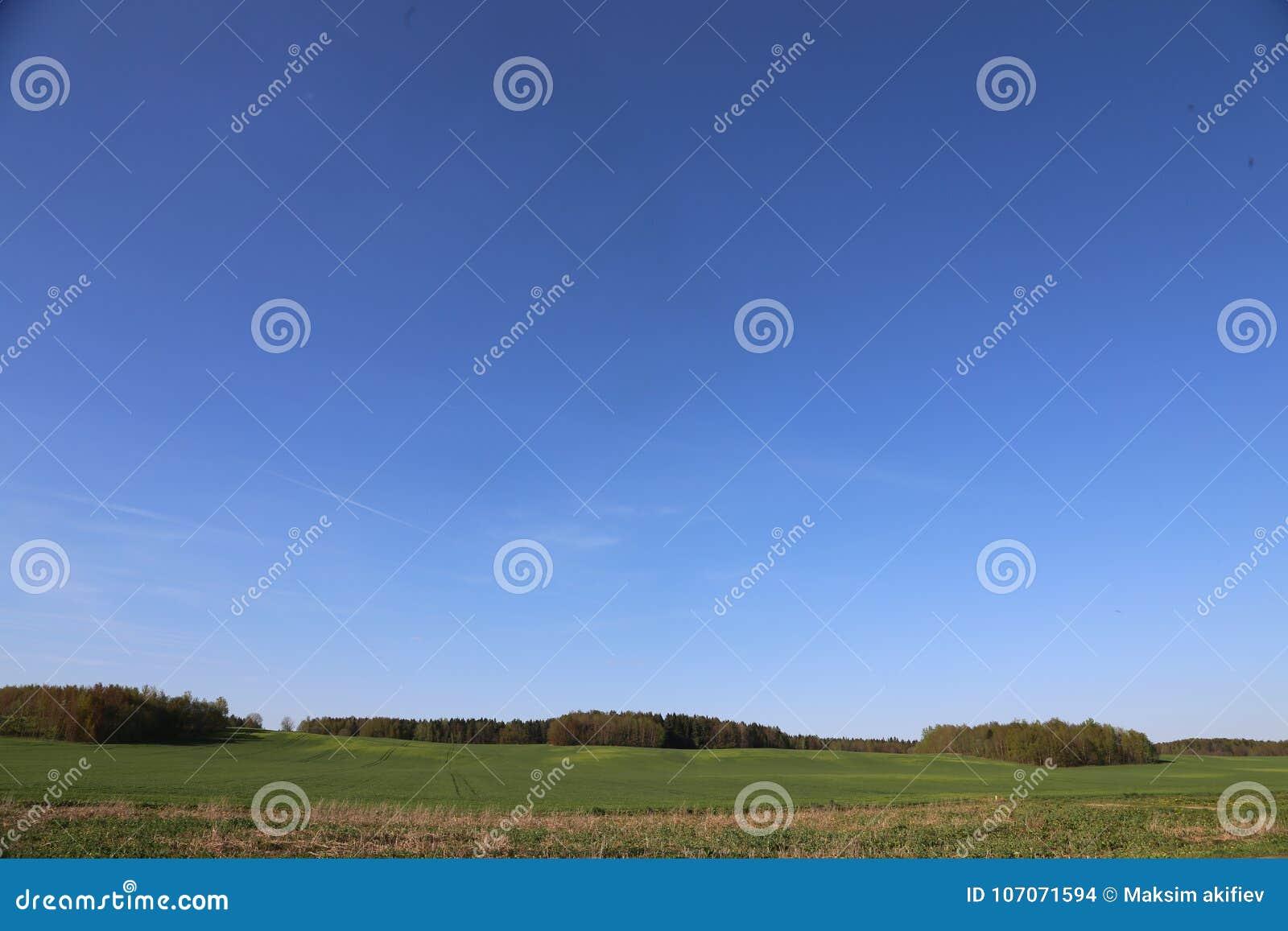Panoramiczny zieleni pole Białoruś, niebieskie niebo i las