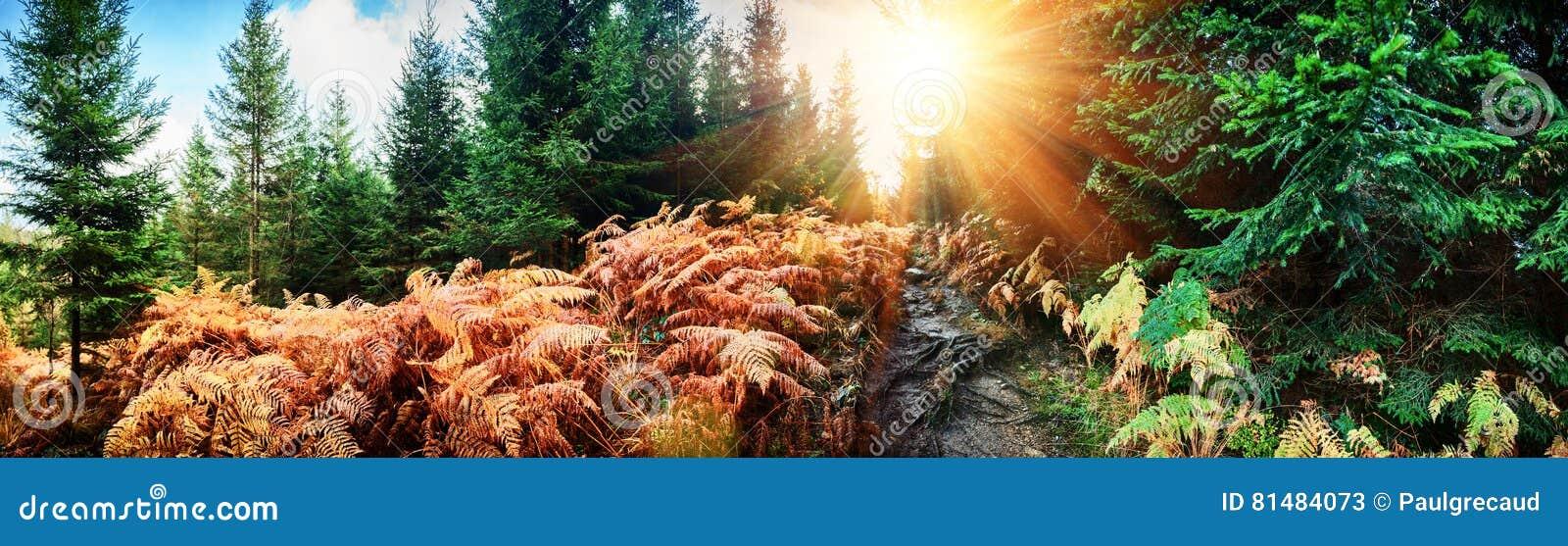 Panoramisch de herfstlandschap met bosweg