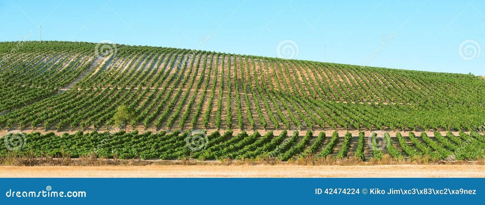 Panoramisch von einem Weinberg