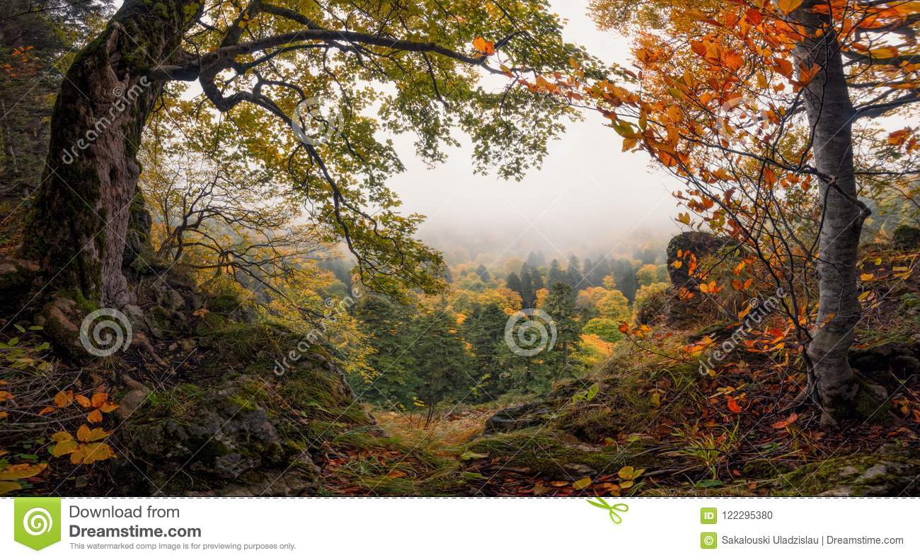 Panoramische Autumn Forest Landscape With View Of-Wi van Bergmisty valley and colorful autumn Forest Enchanted Autumn Foggy Fores