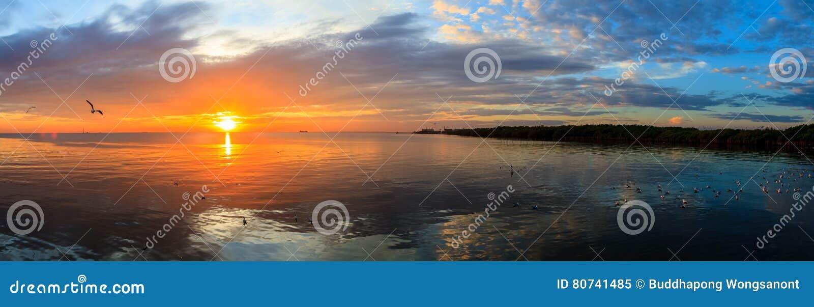Panoramy Spokojnej sceny chmurny denny zmierzch z seagulls lata przy zmierzchem