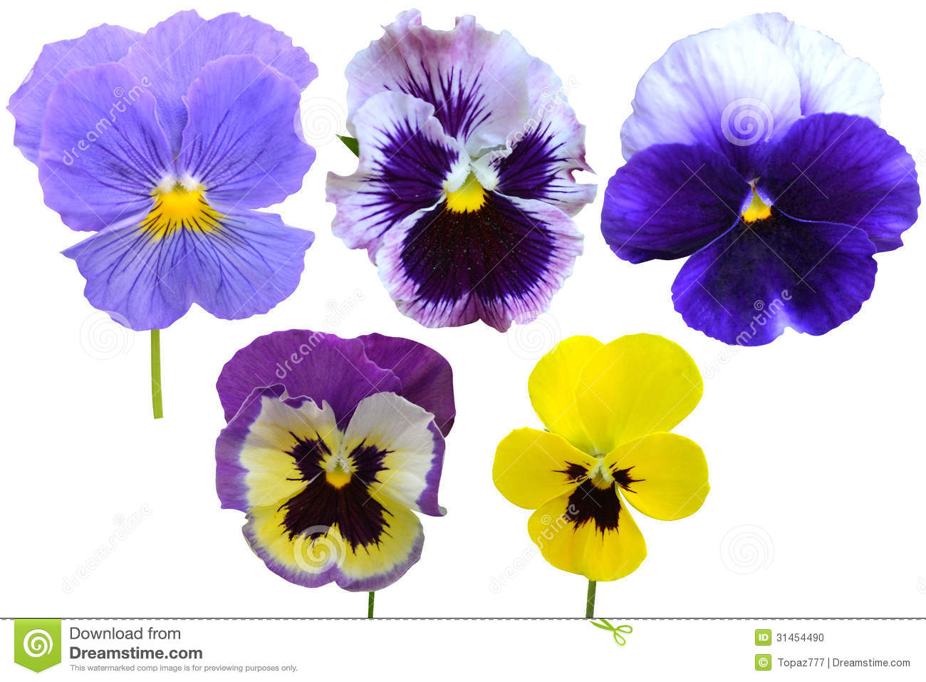 Pansies Violets Flowers Stock Photo Image 31454490