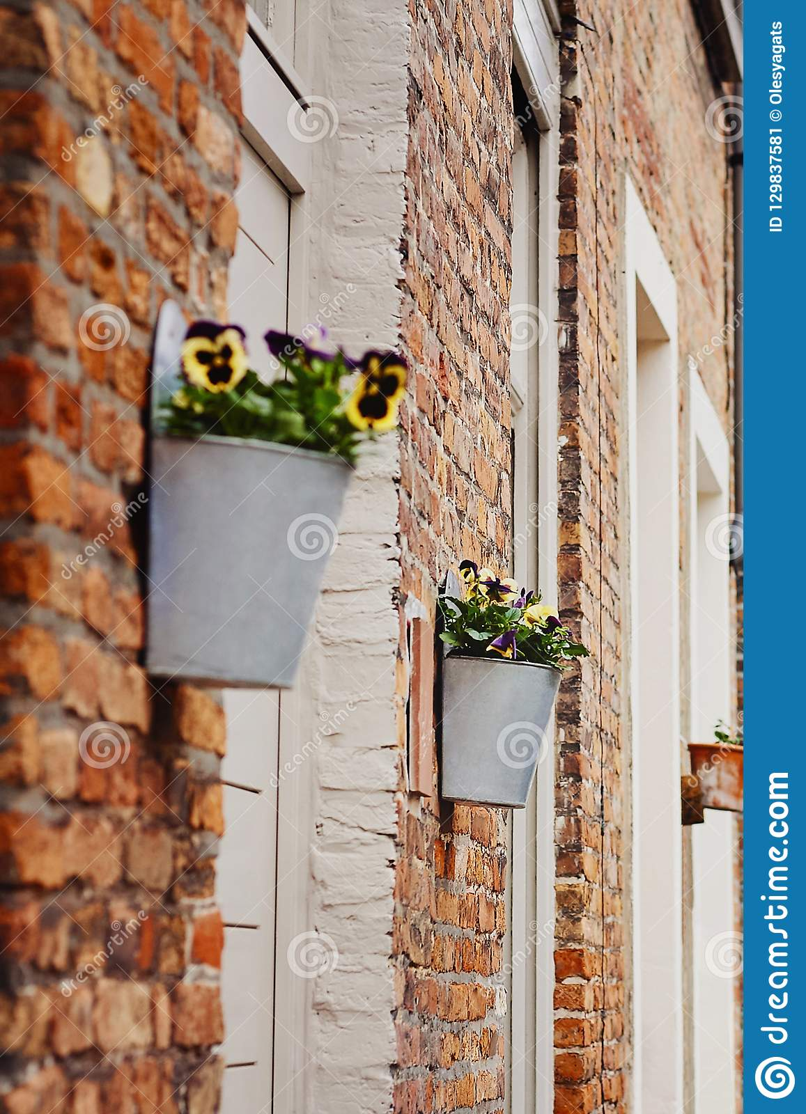 Pansy flowers in flower pot outside on wall of house
