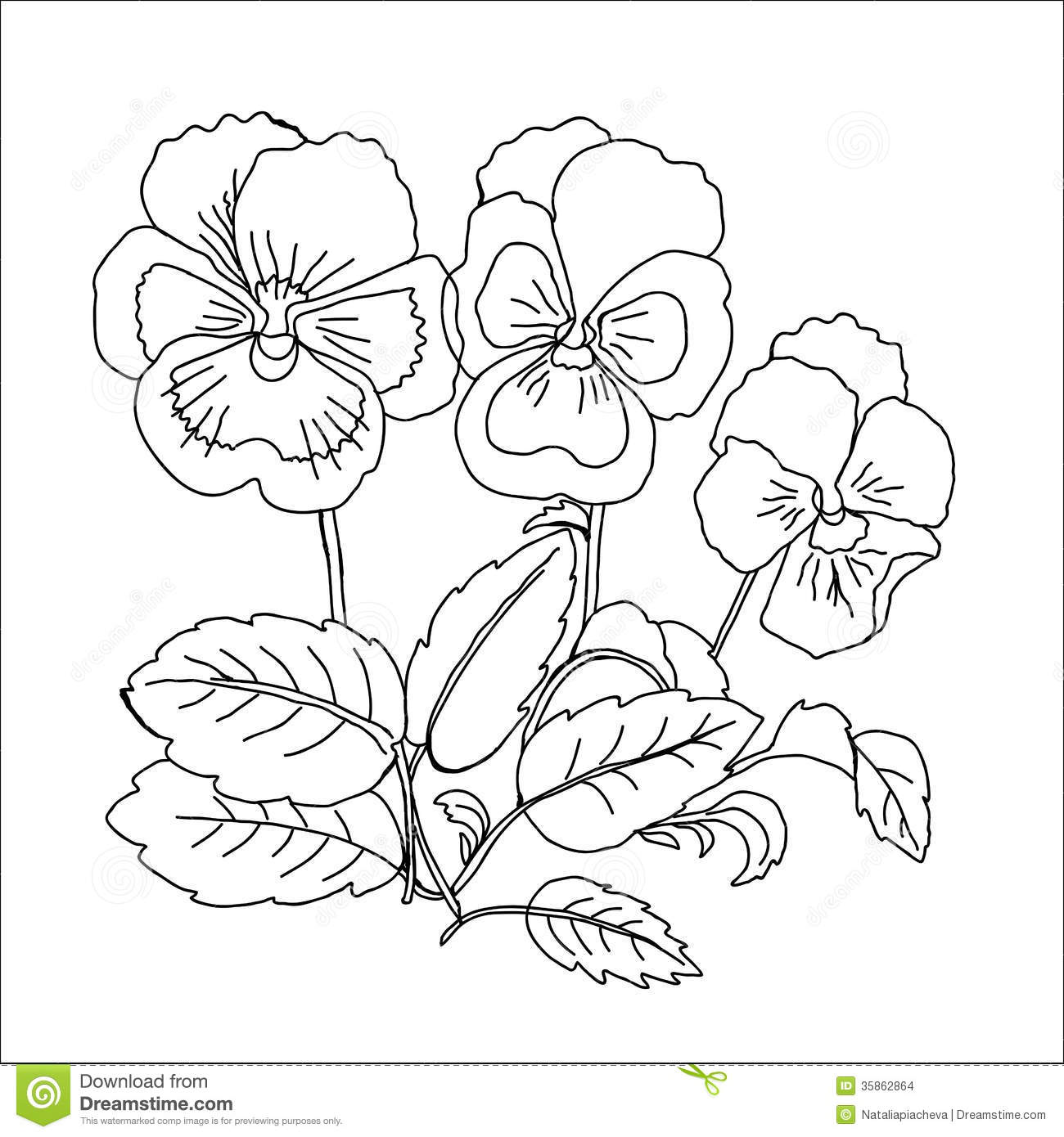 pansy flower drawing - photo #38