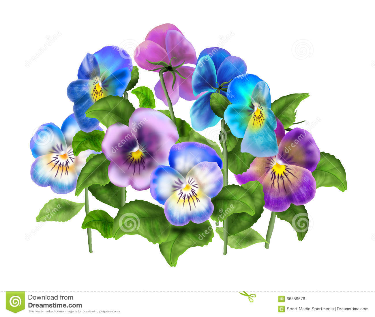 Beautiful Light Blue Bedrooms: Pansy,Viola Flower Isolated On White Stock Photo