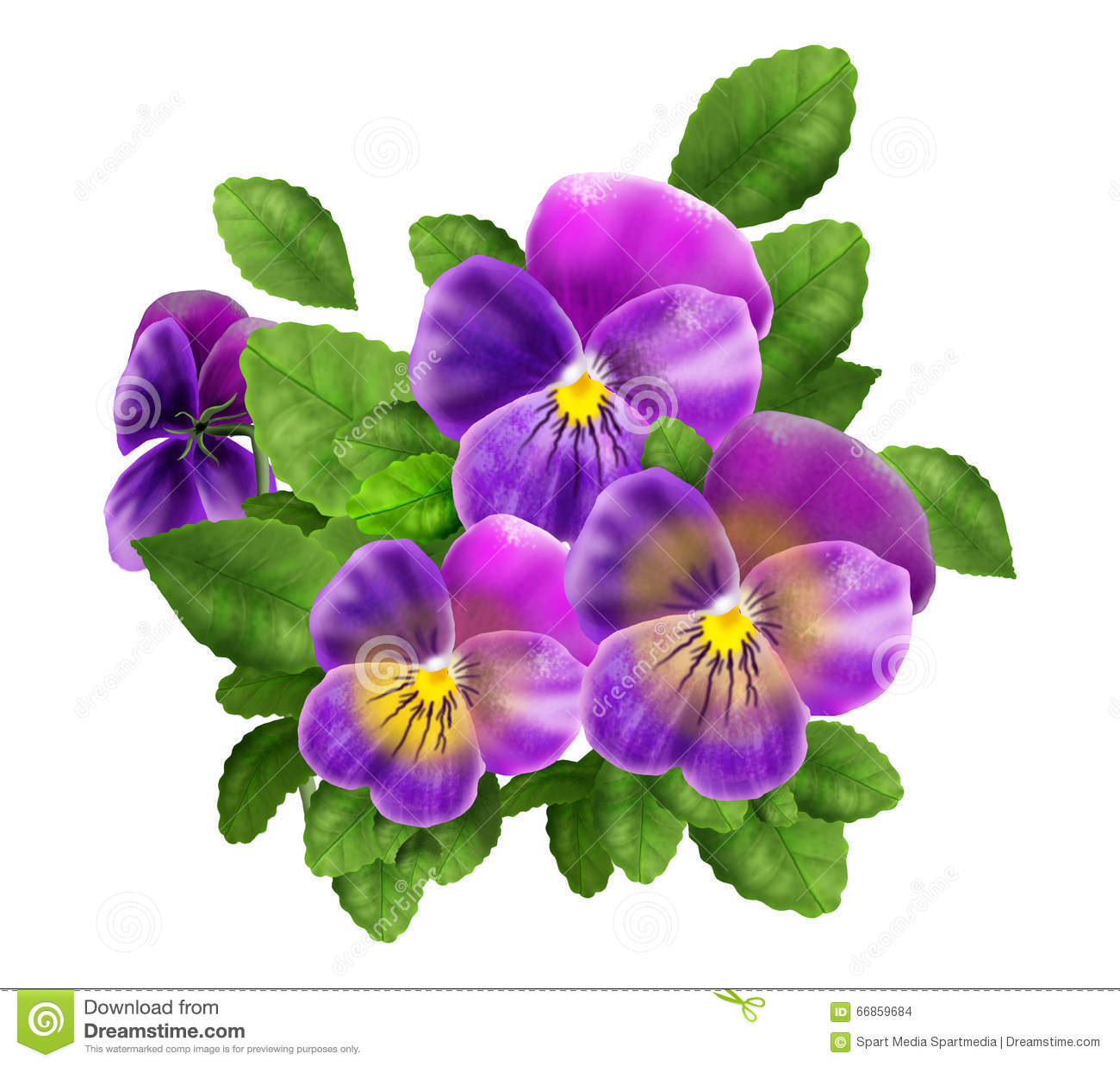 Pansy Violet Flowers Isolated Watercolor Illustration Viola Tricolor Realistic Decoration Stock Photo Illustration Of Ease Closeup 66859684