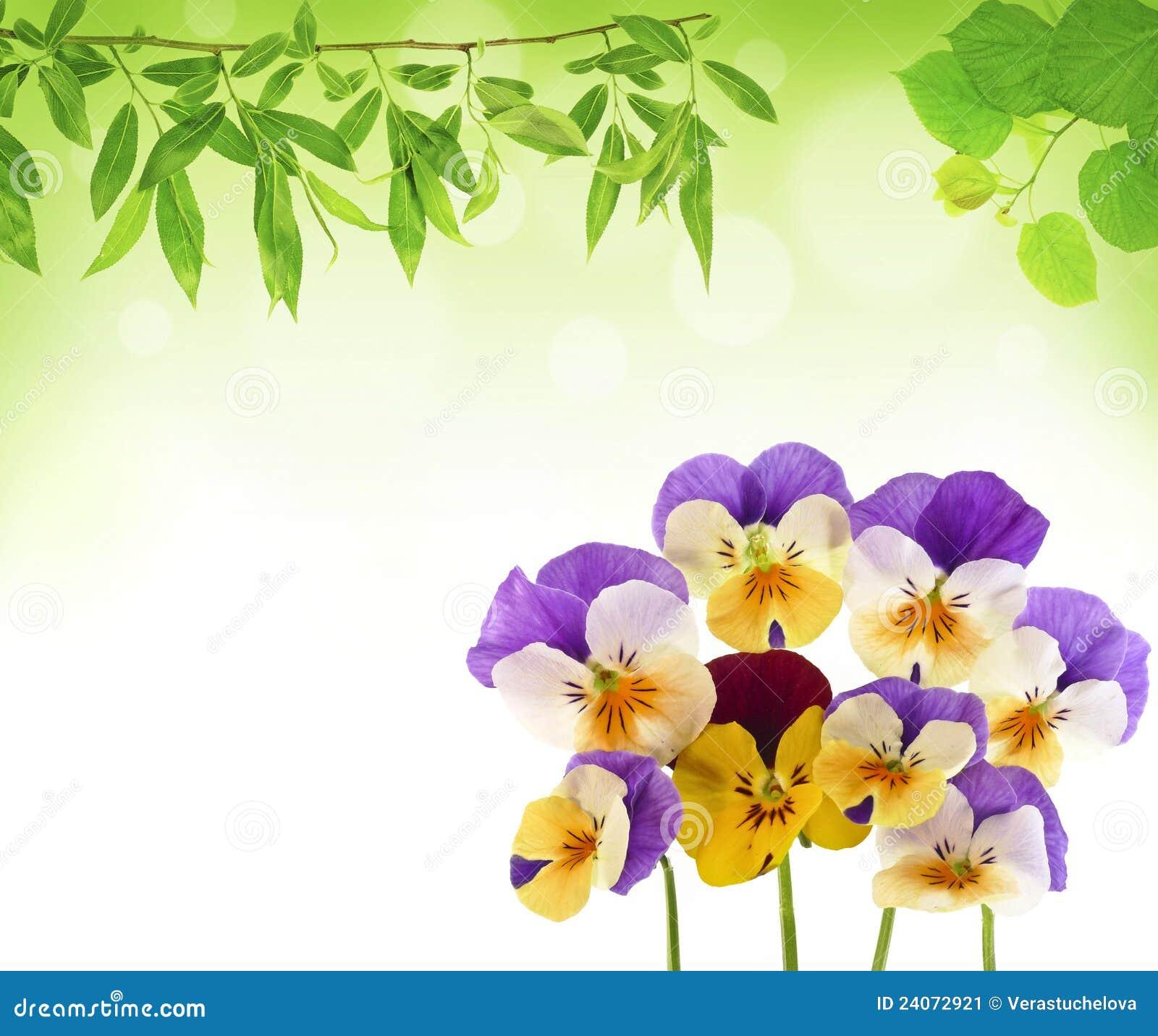 Pansyblumen