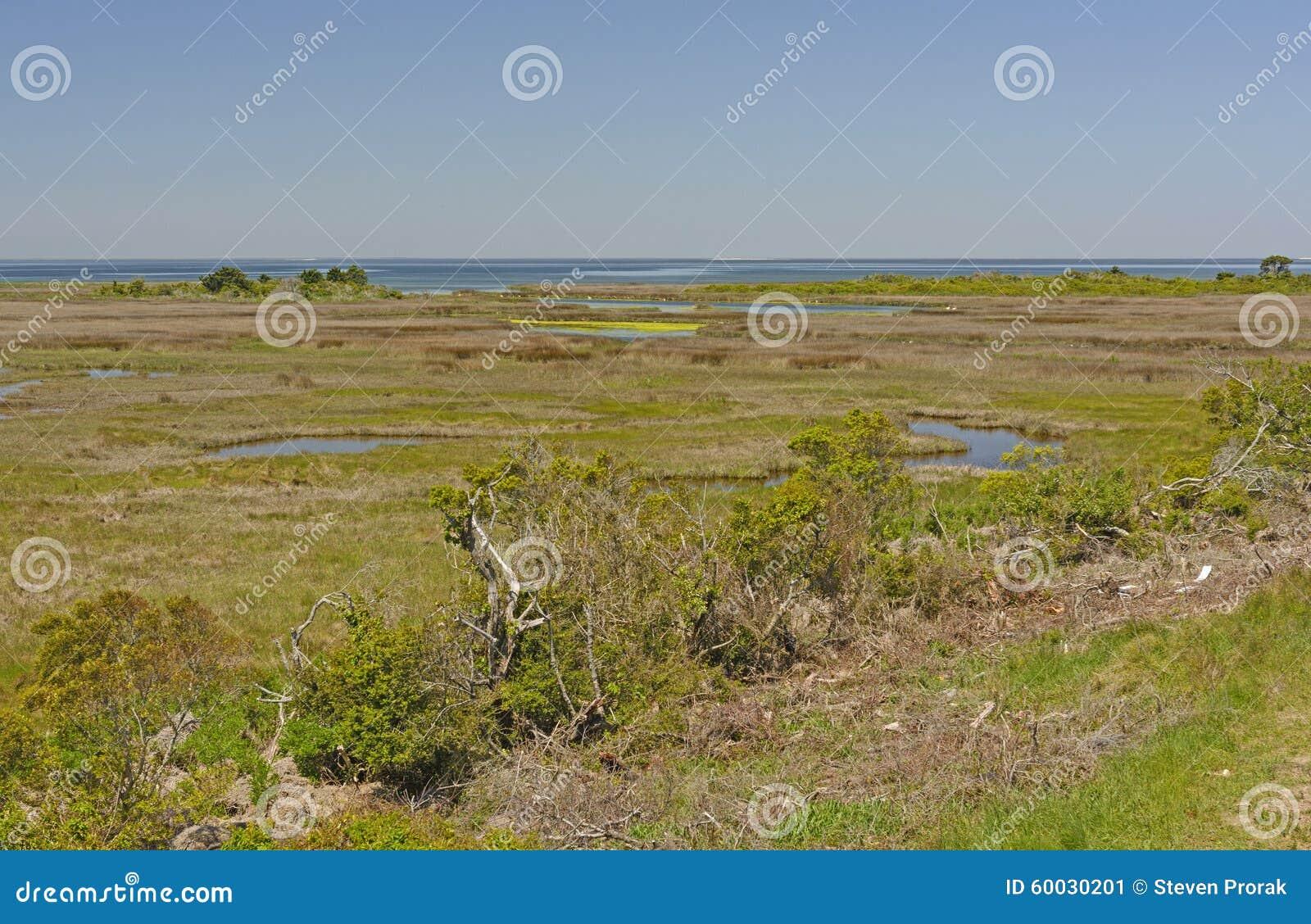 Pantanais em uma ilha da barreira