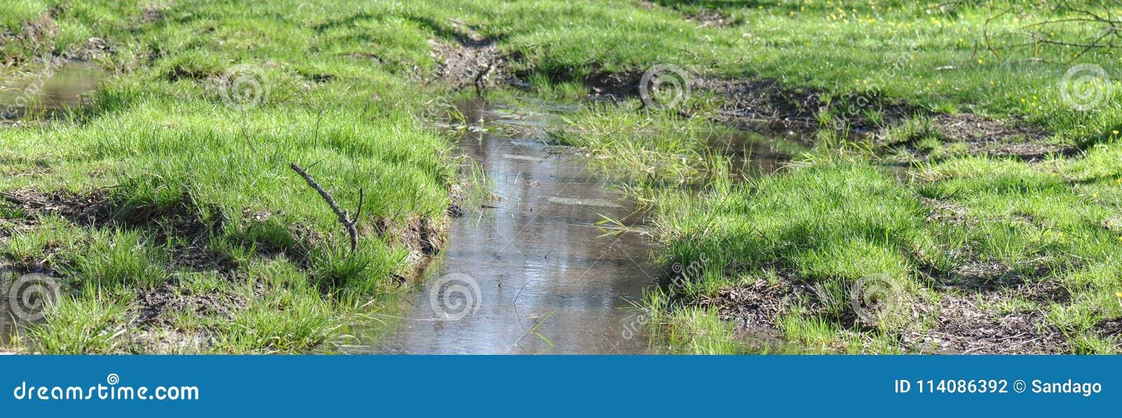 Pantano con la hierba verde