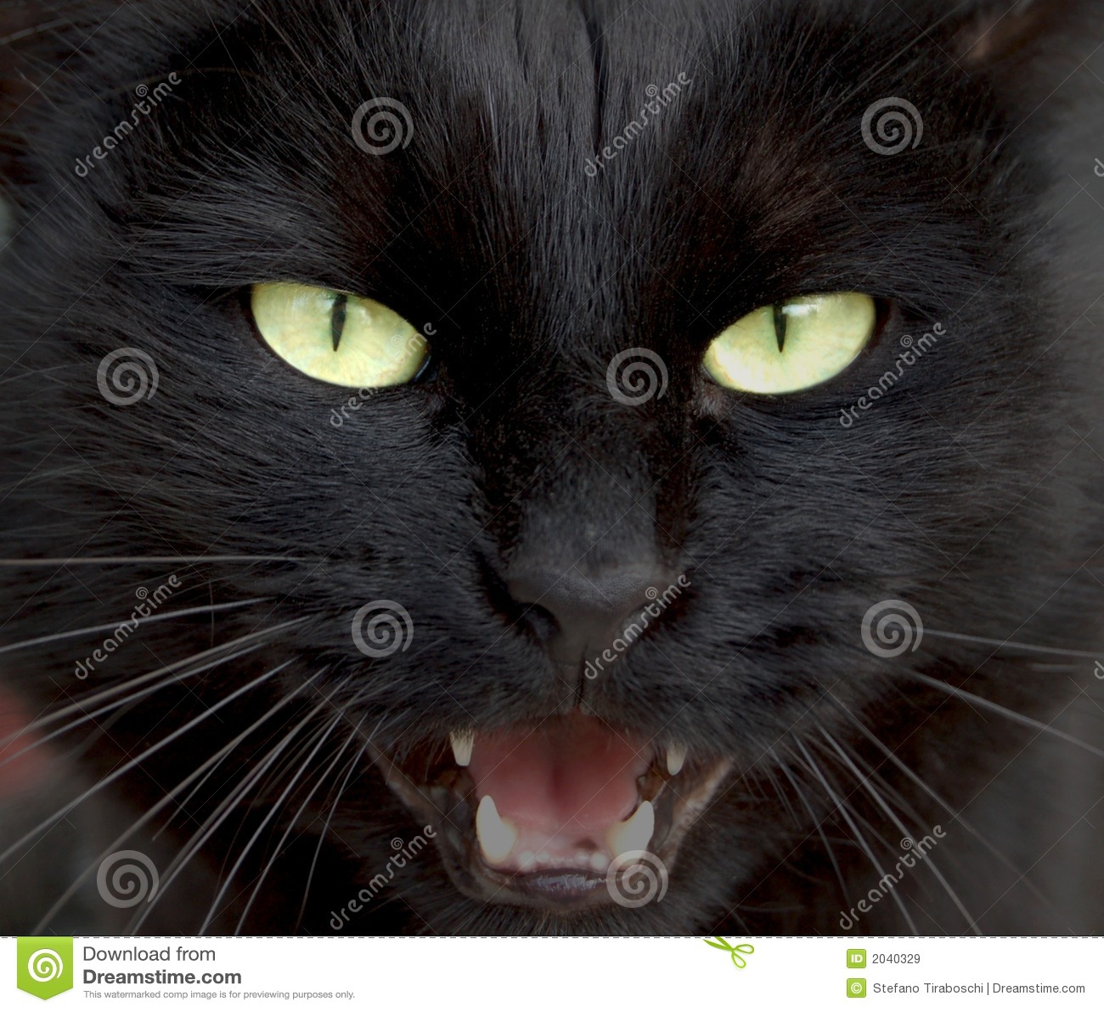 foto pantera nera da