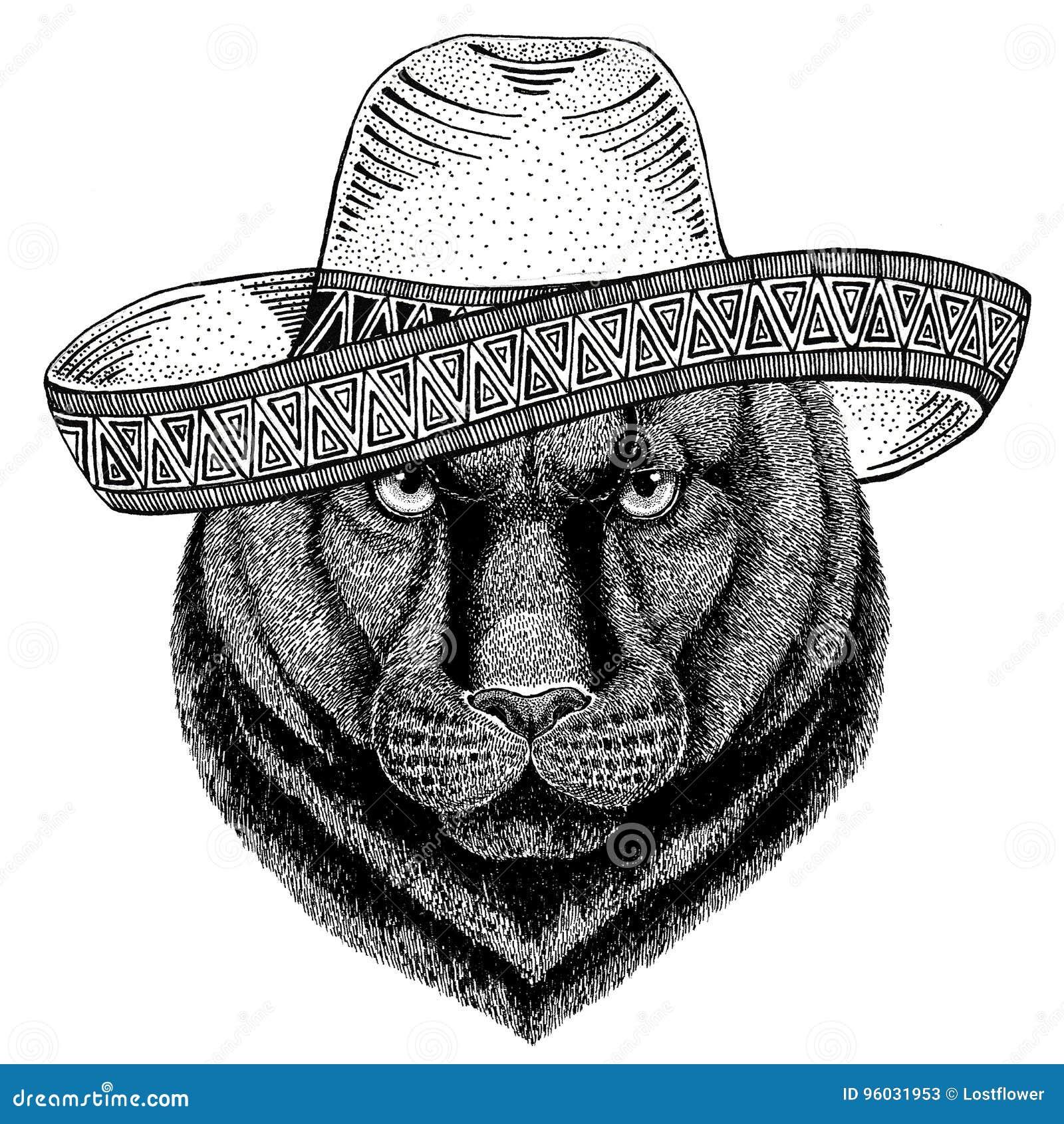 Pantery pumy kuguara dzikie zwierzę jest ubranym sombrero Meksyk fiesta meksykanina przyjęcia ilustracyjnego Dzikiego zachód