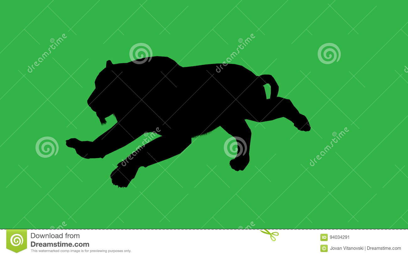 Panther Moving  On Green Screen Stock Video - Video of loop