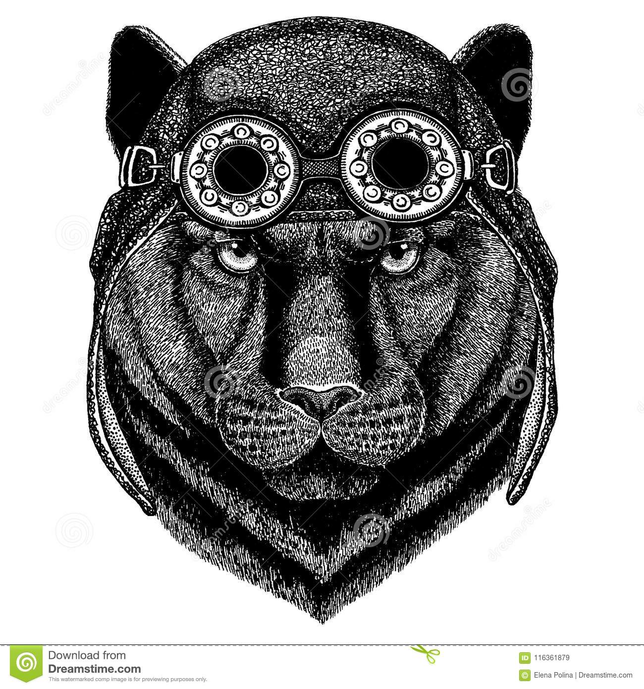 576ec7a52 Cute animal wearing motorcycle, aviator helmet Panther Puma Cougar Wild cat  Hand drawn image for
