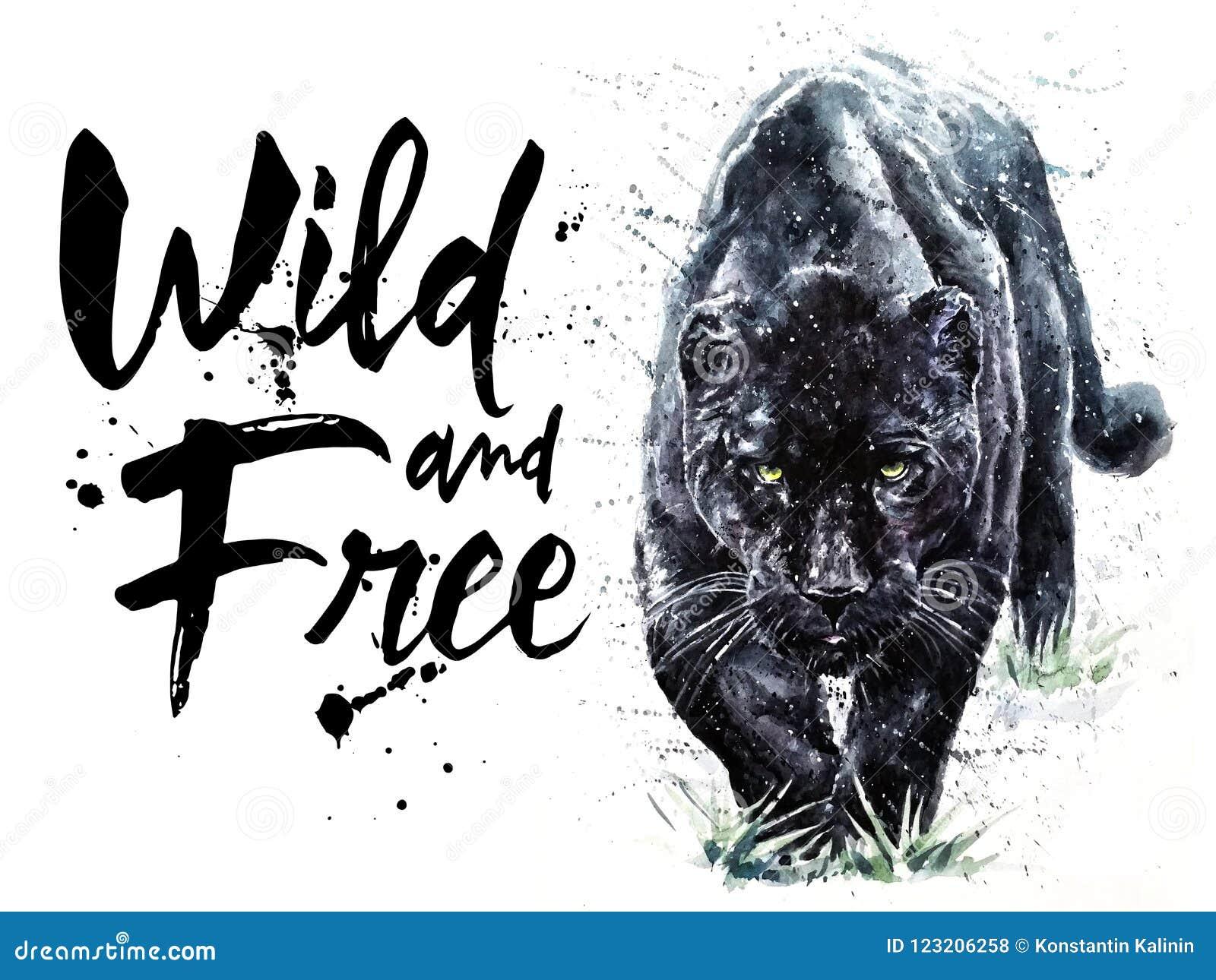 Panther Watercolor Painting Predator Animals Puma Jaguar Wild Free Stock Illustration Illustration Of Beautiful Background 123206258