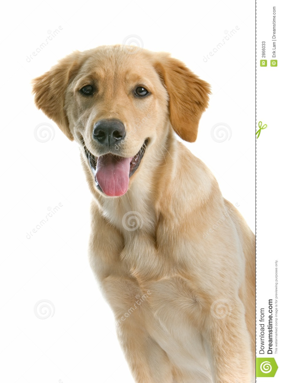 121,186 dogs stock images are available royalty-free.