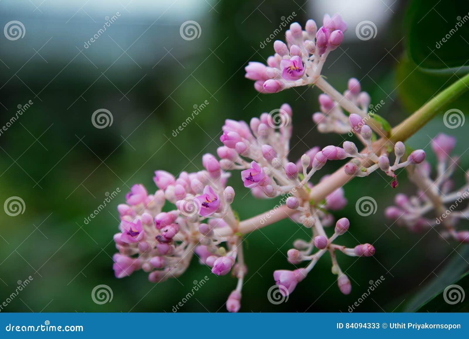 Pants tree flower