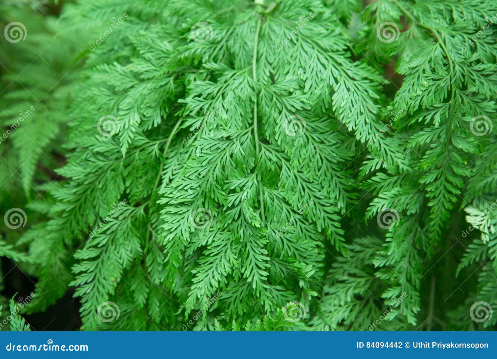 Pants tree leaf