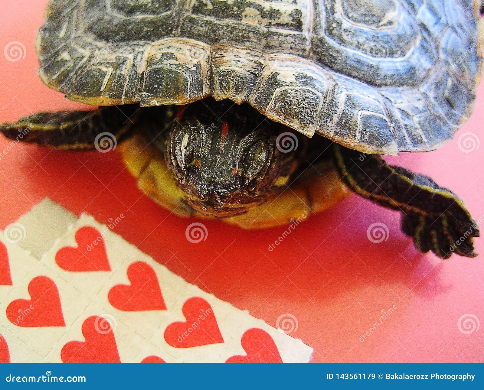 Papéis vermelhos pequenos da vara do Lsd com detalhes macro de um papel de parede do fundo da tartaruga