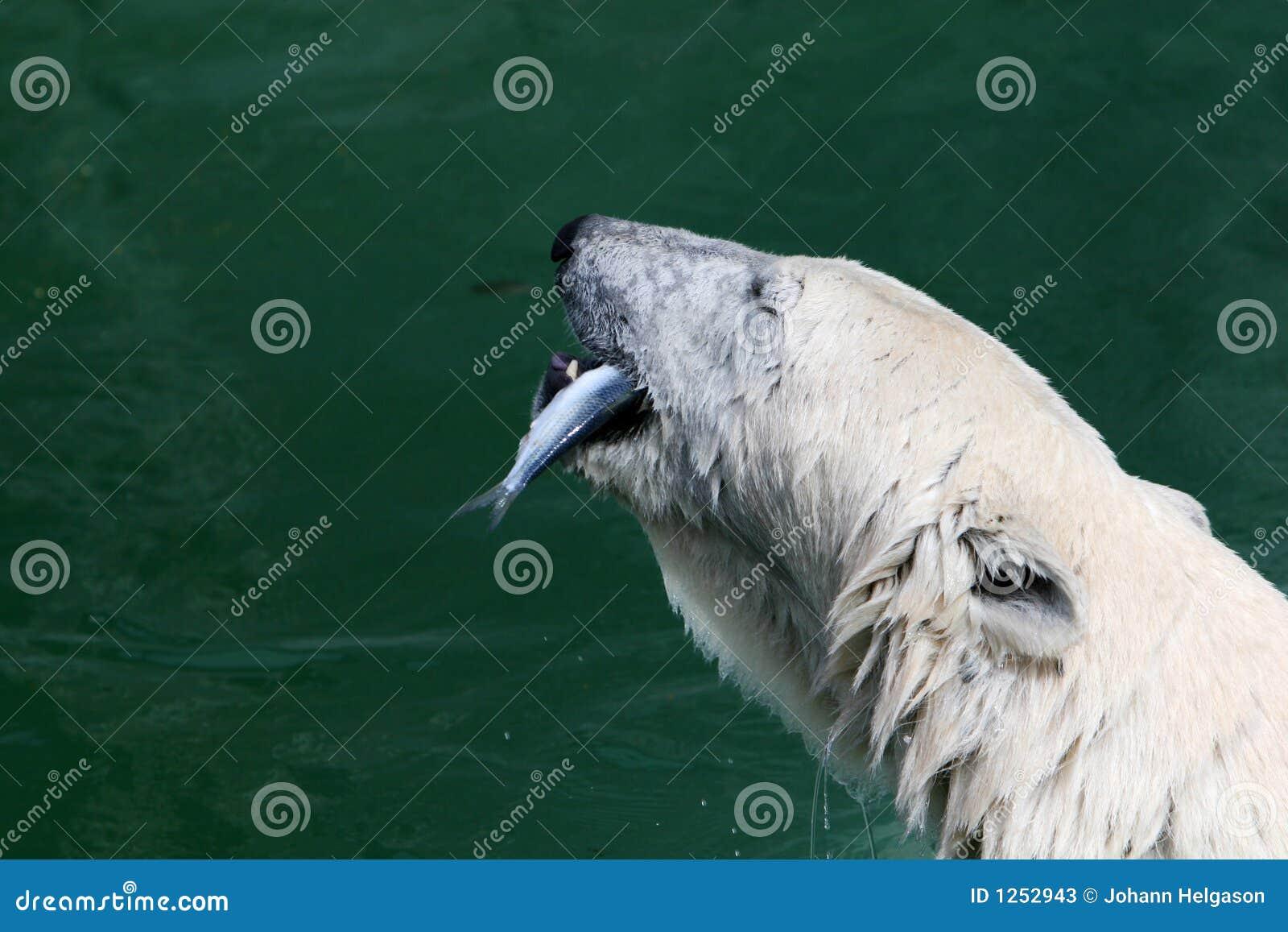 Papa bear stock photos image 1252943 for Dreaming of eating fish