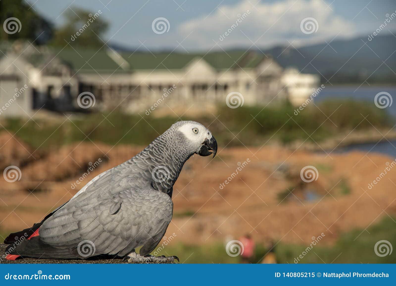 Papagaio ascendente próximo do pássaro do macore no fundo borrado