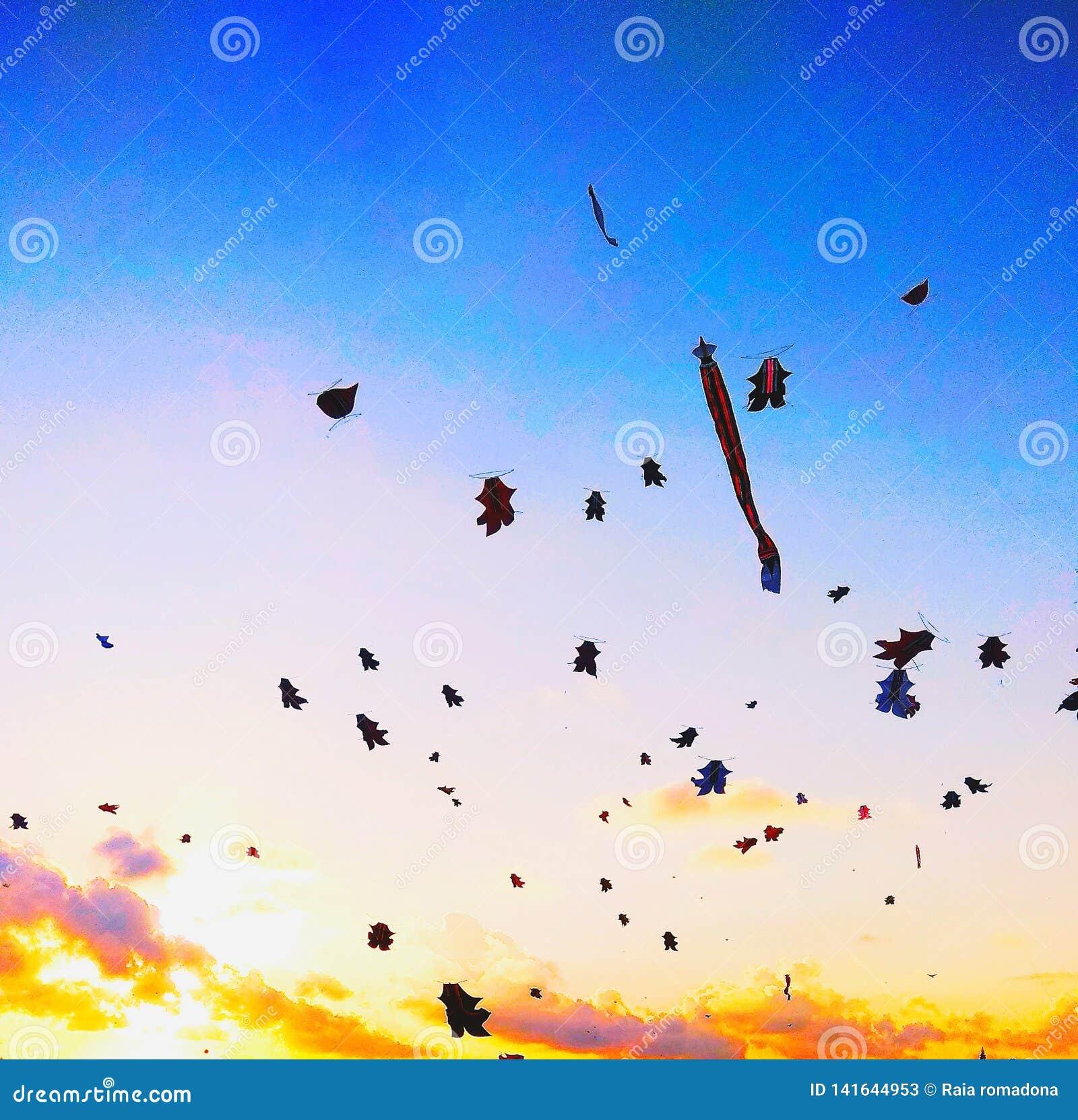 Papagaio da beleza no por do sol do céu da tarde