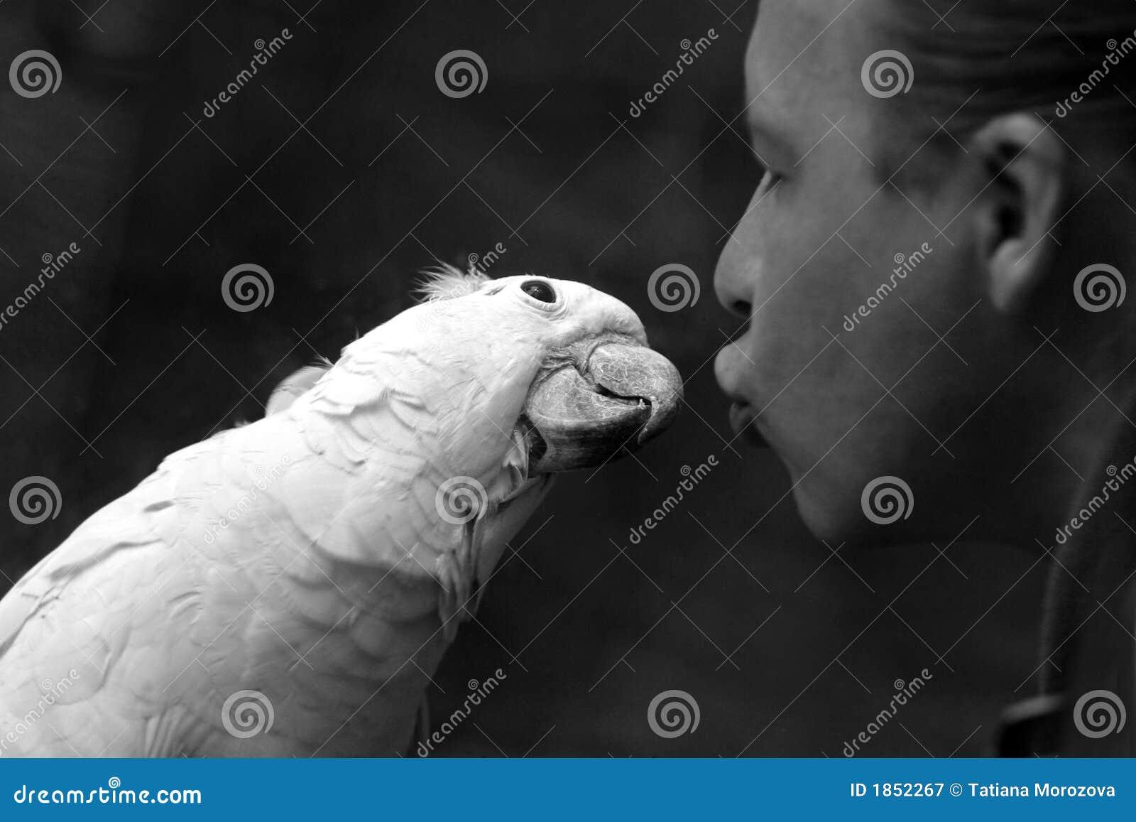 Papagaio e o homem