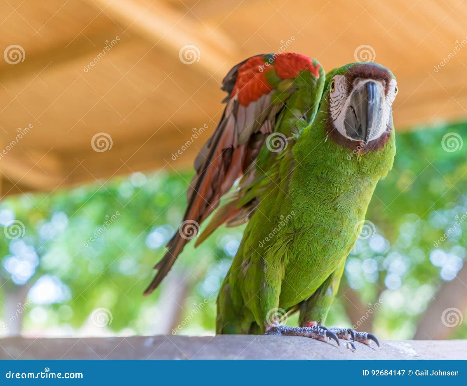 Papagaio em uma cerca Curacao Views