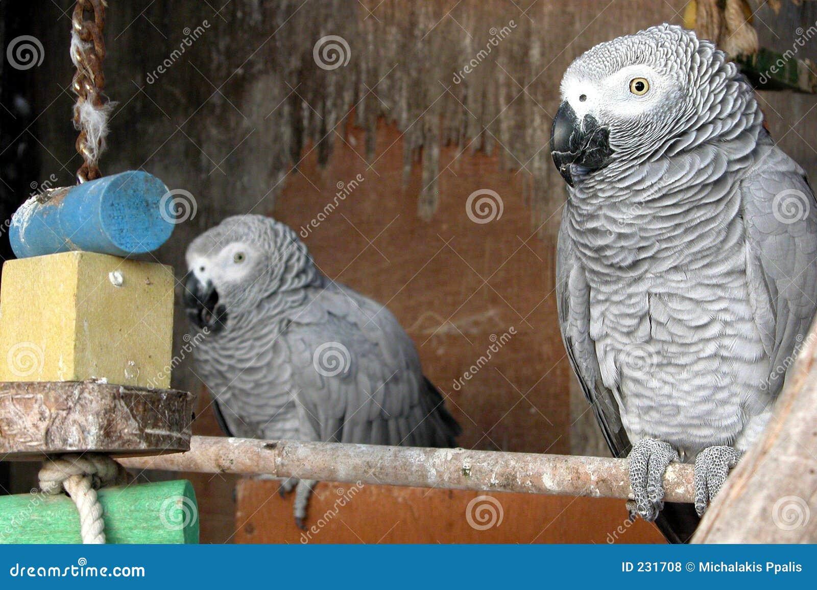 Papagaio que descansa em uma gaiola