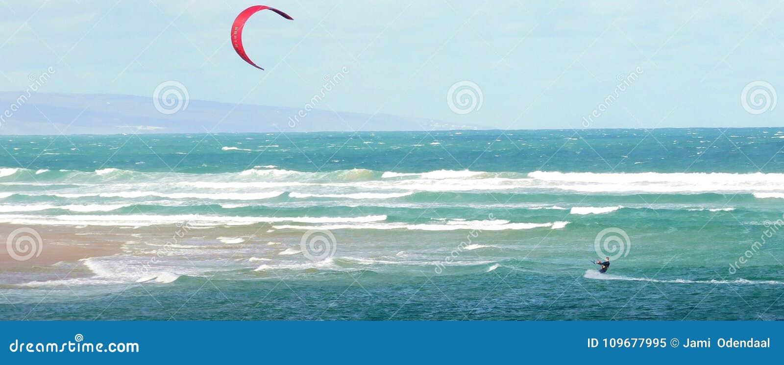 Papagaio que surfa fora da costa