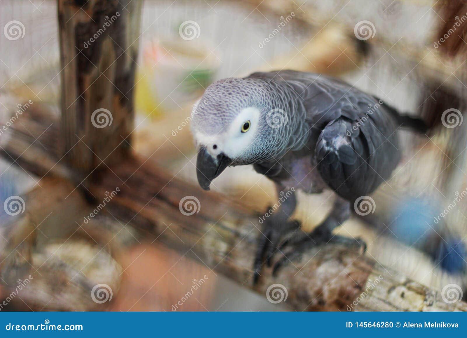 Papagei, der auf einem Zweig sitzt
