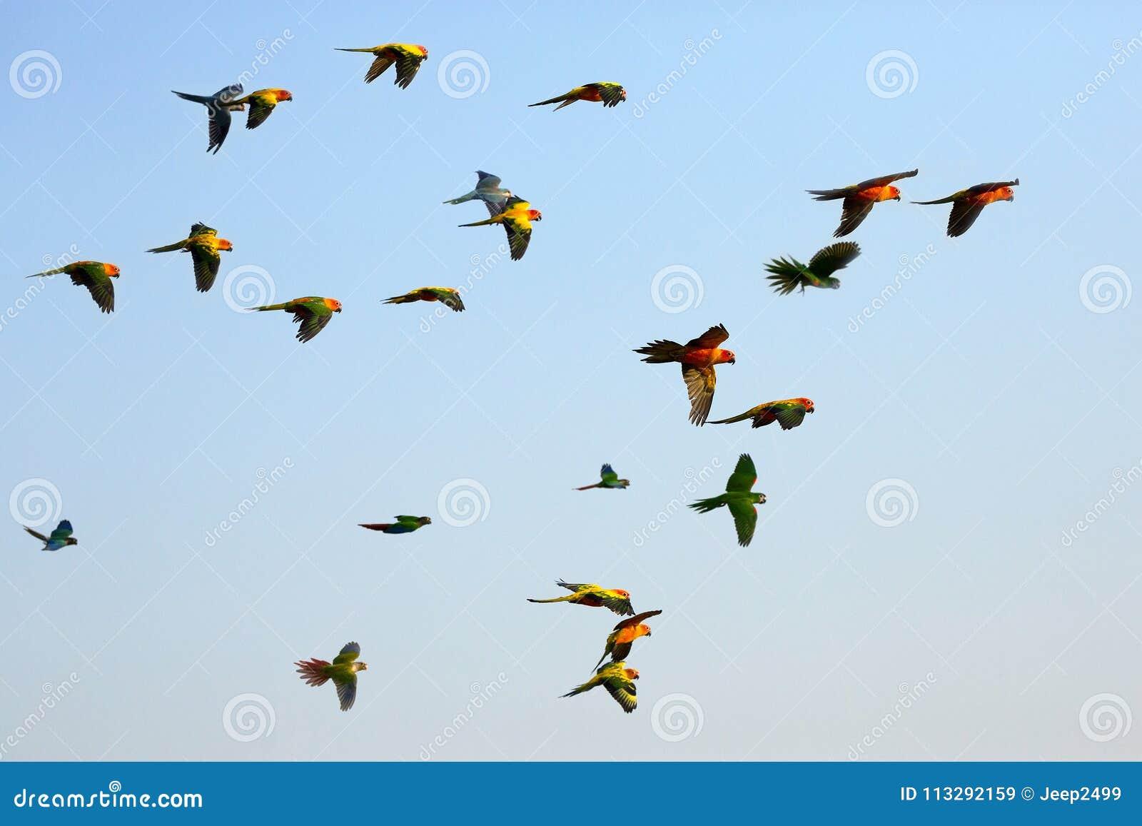 Papageien, die in den Himmel fliegen