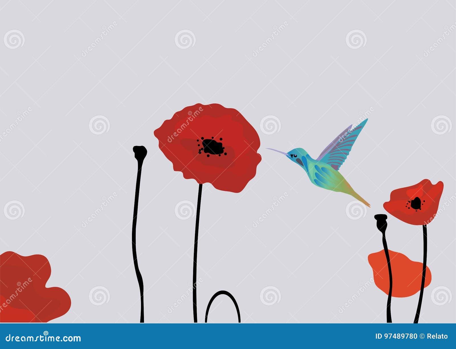 Papaveri dei colibrì di vettore