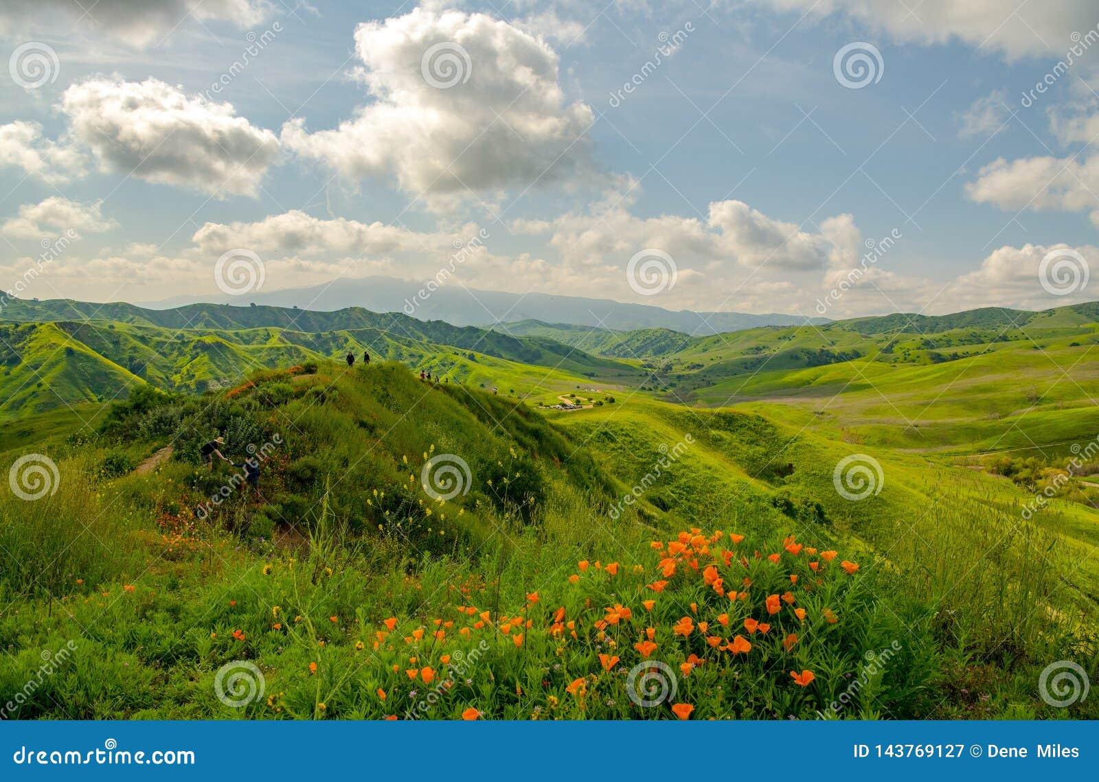 Papavers en de lente groene heuvels op een mooie dag