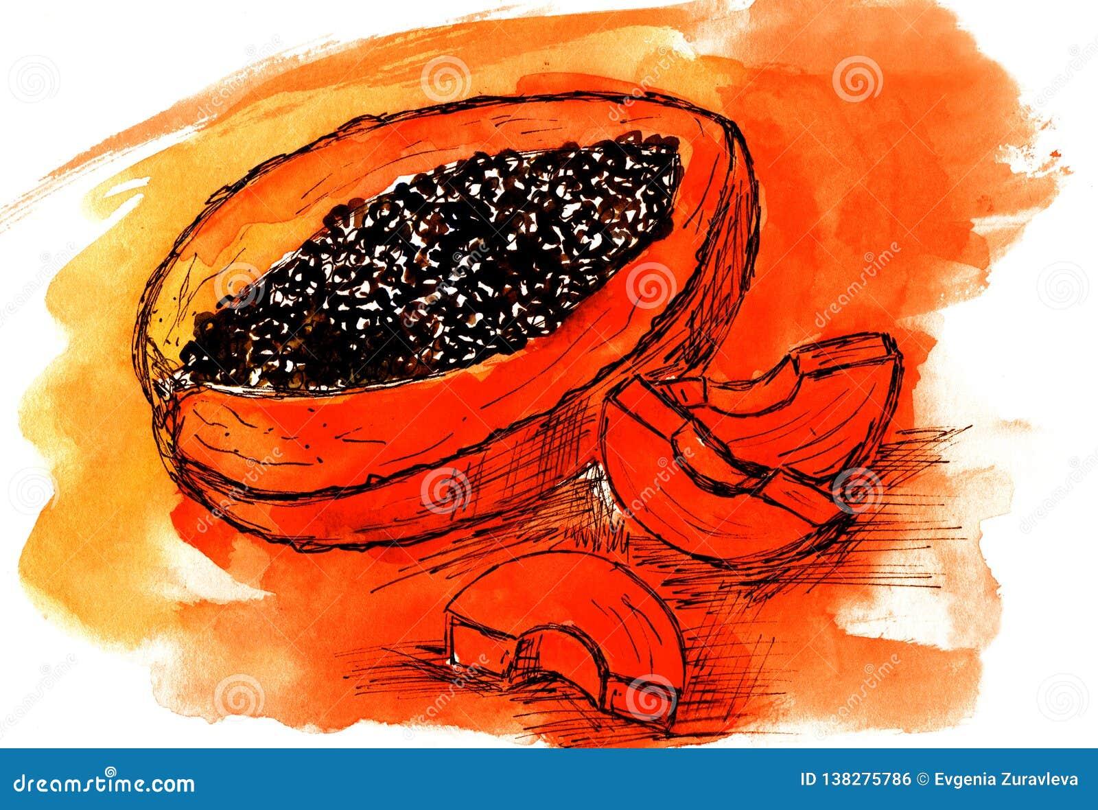 Papaya πορτοκάλι σχεδίων σκίτσων watercolor