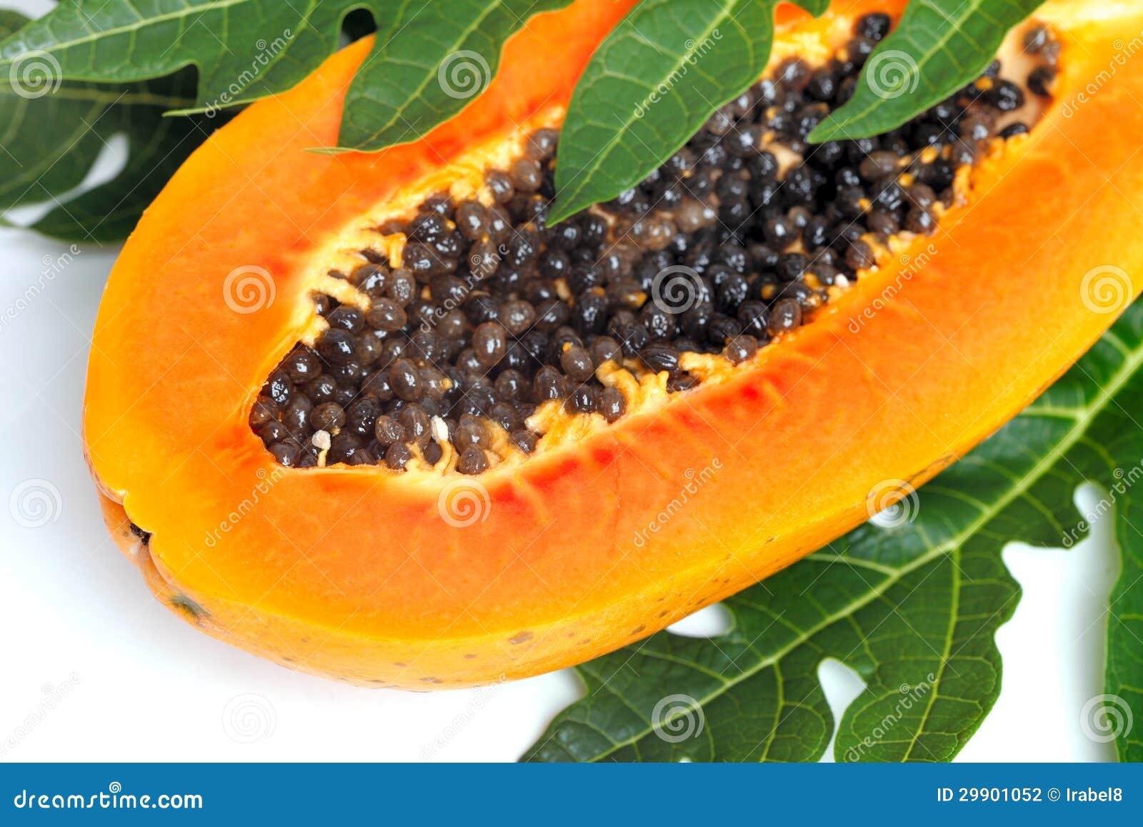 semillas de hiedra maduras - thebellmeadecom